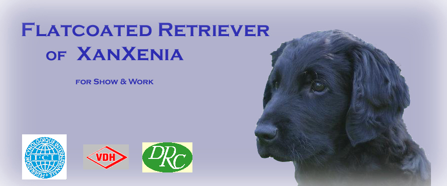 Flatcoated Retriever of XanXenia